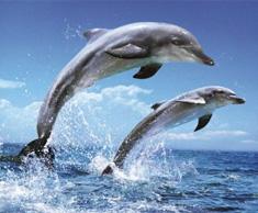 Massacro di Delfini in Giappone