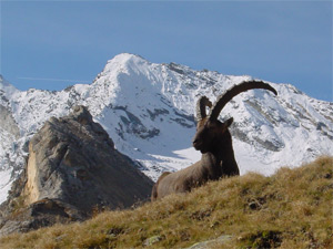 Vola il Turismo Natura, presentate le previsioni nel corso della 19a edizione di Ecotur
