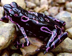 Sempre più numerose le scoperte di specie animali in giro per il mondo