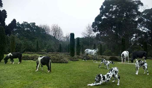 Poetica e meticolosa, la mostra Black and White Animals di Bethan Huws