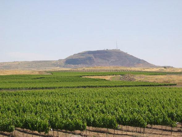 Alla scoperta delle boutique di vino, da Israele un modo di concepire la distribuzione