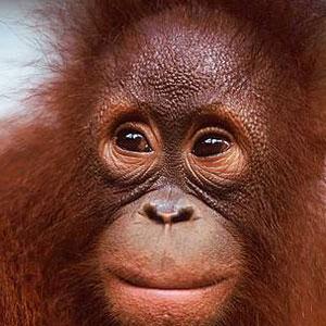 Il cuore del Borneo è ancora in buona salute, parola del WWF
