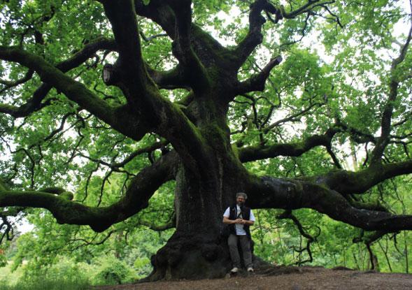 """A Torino da oggi partono le """"Passeggiate per cercatori di alberi"""""""