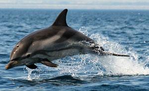 """""""Ricercatori per un giorno"""". La Jonian Dolphin Conservation li porta in catamarano"""