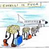 fugacervelli5