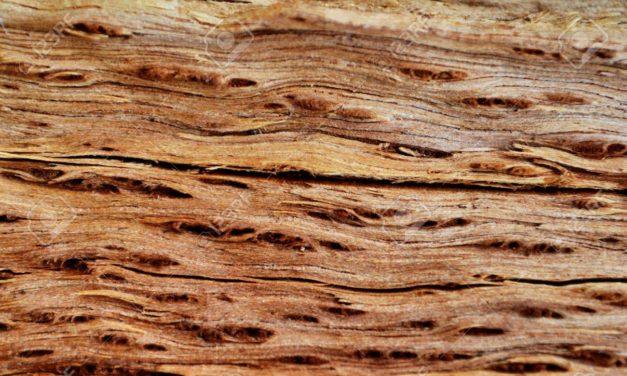 Stop alberi abbattuti: il MIT studia come creare legno in laboratorio