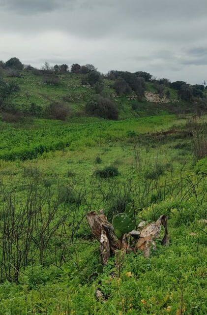 City Nature Challenge, il bioblitz approda in Provincia di Bari