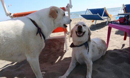 Riapre Baubeach, a Maccarese (Roma) la spiaggia dei cani felici