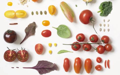 Embryonica, dal 1° ottobre la mostra multimediale del Food&Science Festival 2021